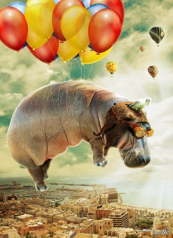 #hippopotame #2017